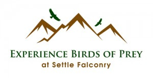 Settle Falconry Experiences-01